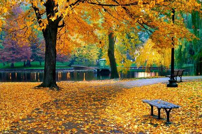 Herbstanfang im Park